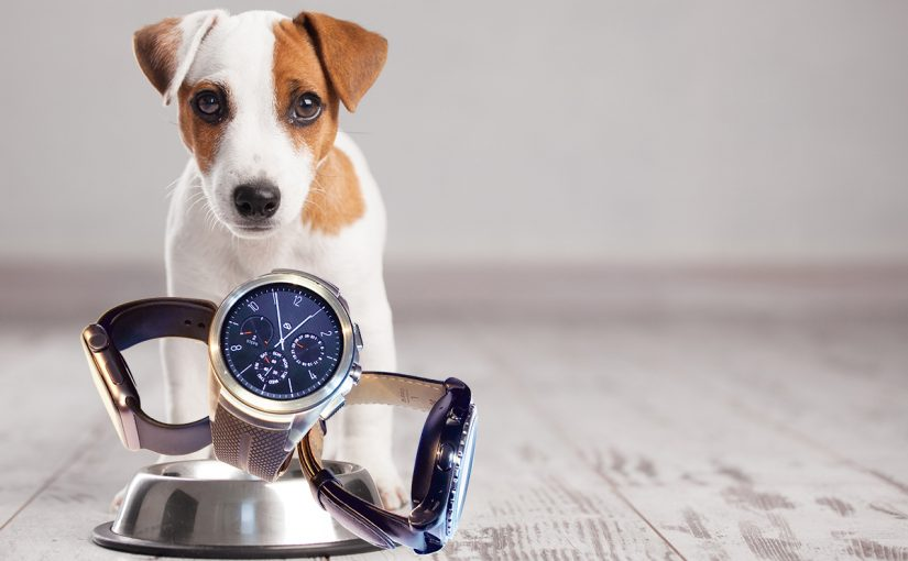 Smartwatch, quo vadis?